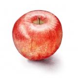 apple8x8